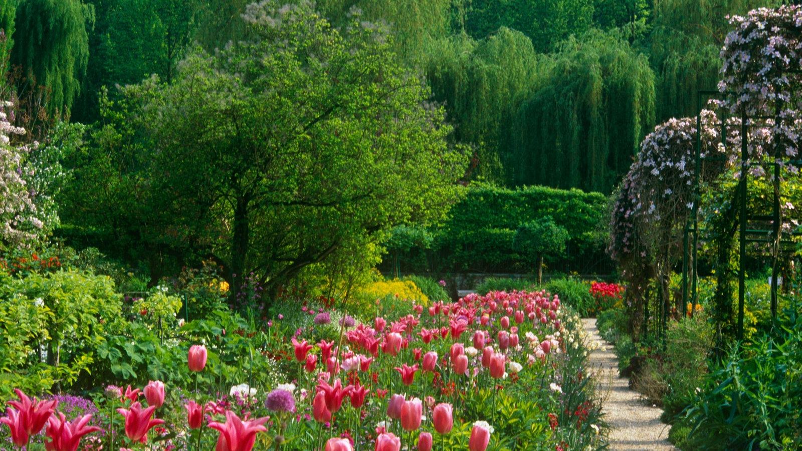 tulpen pflege tulpen pflege tulpen pflanzen pflege und. Black Bedroom Furniture Sets. Home Design Ideas