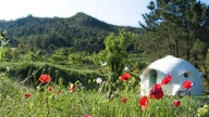 Glamping: Eco Dome