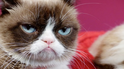 "Petfluencer und Internet-Star ""Grumpy Cat"""
