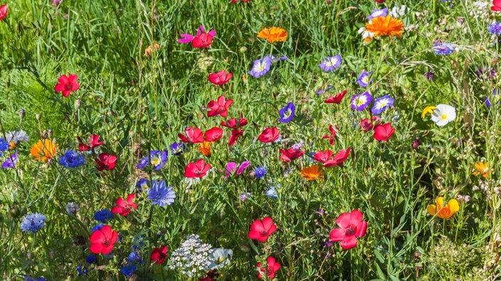 Pflegeleichter Garten Pflanztipps Für Blüten Ohne Viel Aufwand