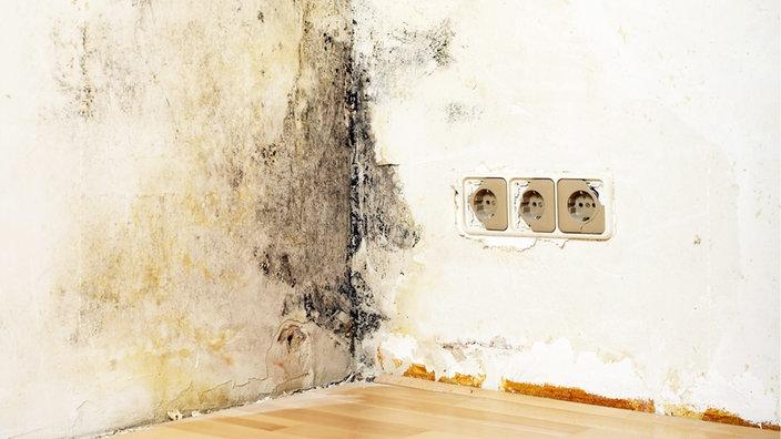 schimmel in der mietwohnung was tun. Black Bedroom Furniture Sets. Home Design Ideas