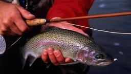 Ein Angler hält einen Fisch