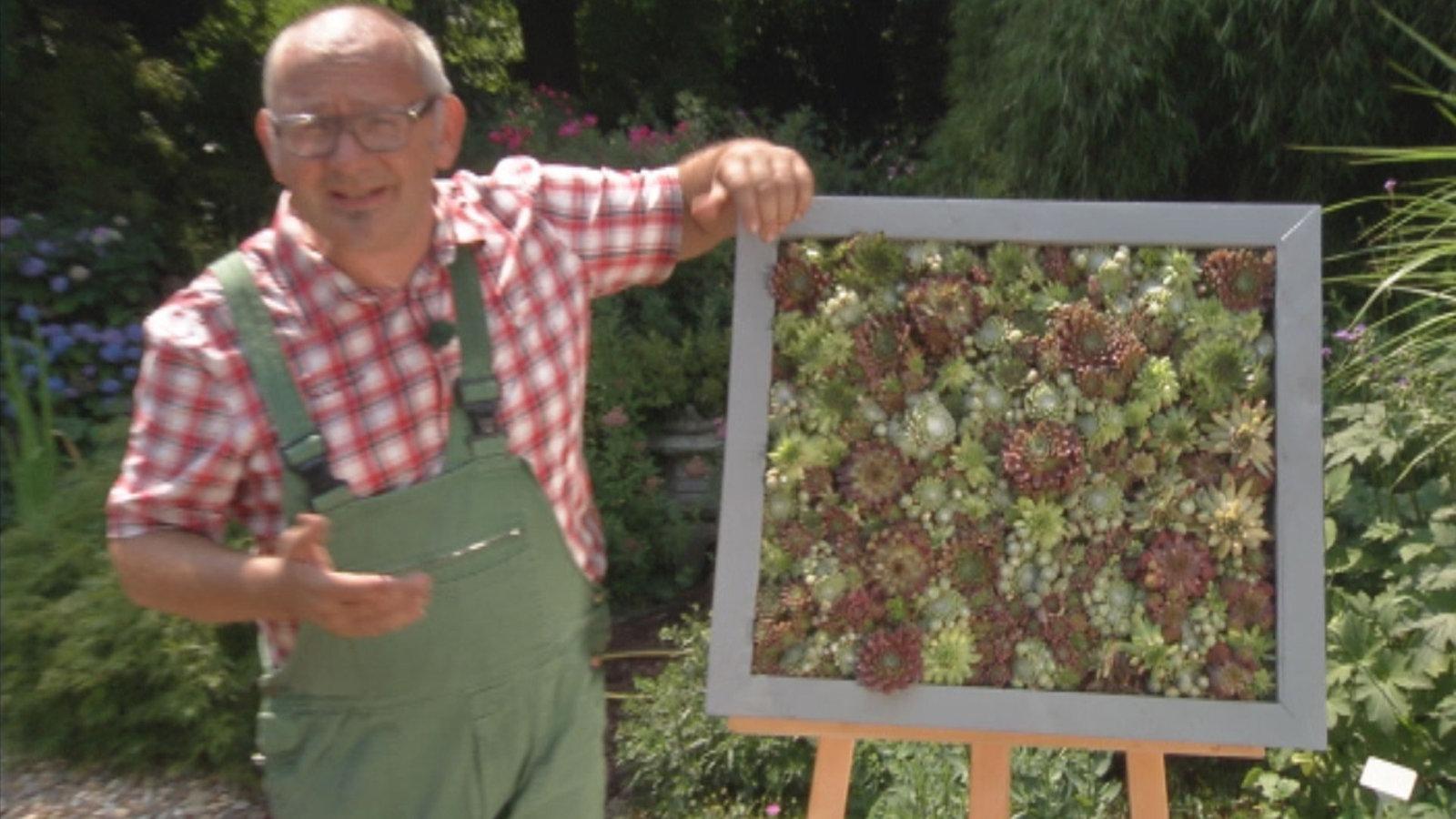 Spruche Buch Gestalten : Gartenzeit Pflanzideen mit Sukkulenten  Lokalzeit  Fernsehen  WDR
