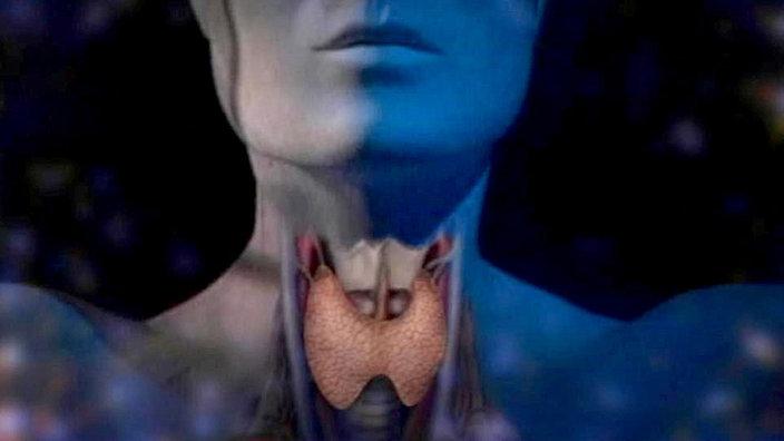 Anatomie des Menschen: Hormone - Hormone - Natur - Planet Wissen