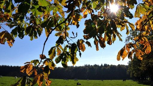 Blauer Himmel, Herbstlaub