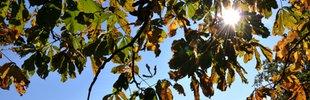 Blauer Himmel, Herbst