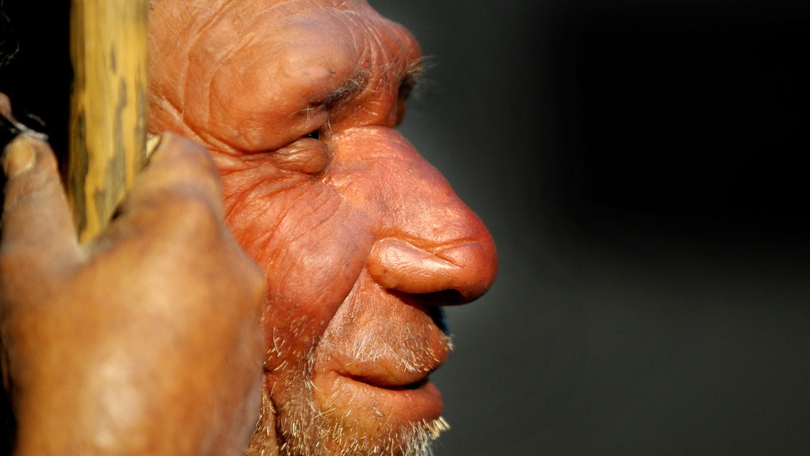 neandertaler gene beeinflussen unser leben mensch wissen wdr. Black Bedroom Furniture Sets. Home Design Ideas