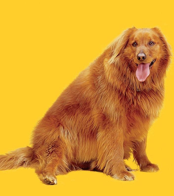 Ein Dicker Hund