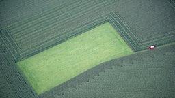 Grünland inmitten von Maisfeldern