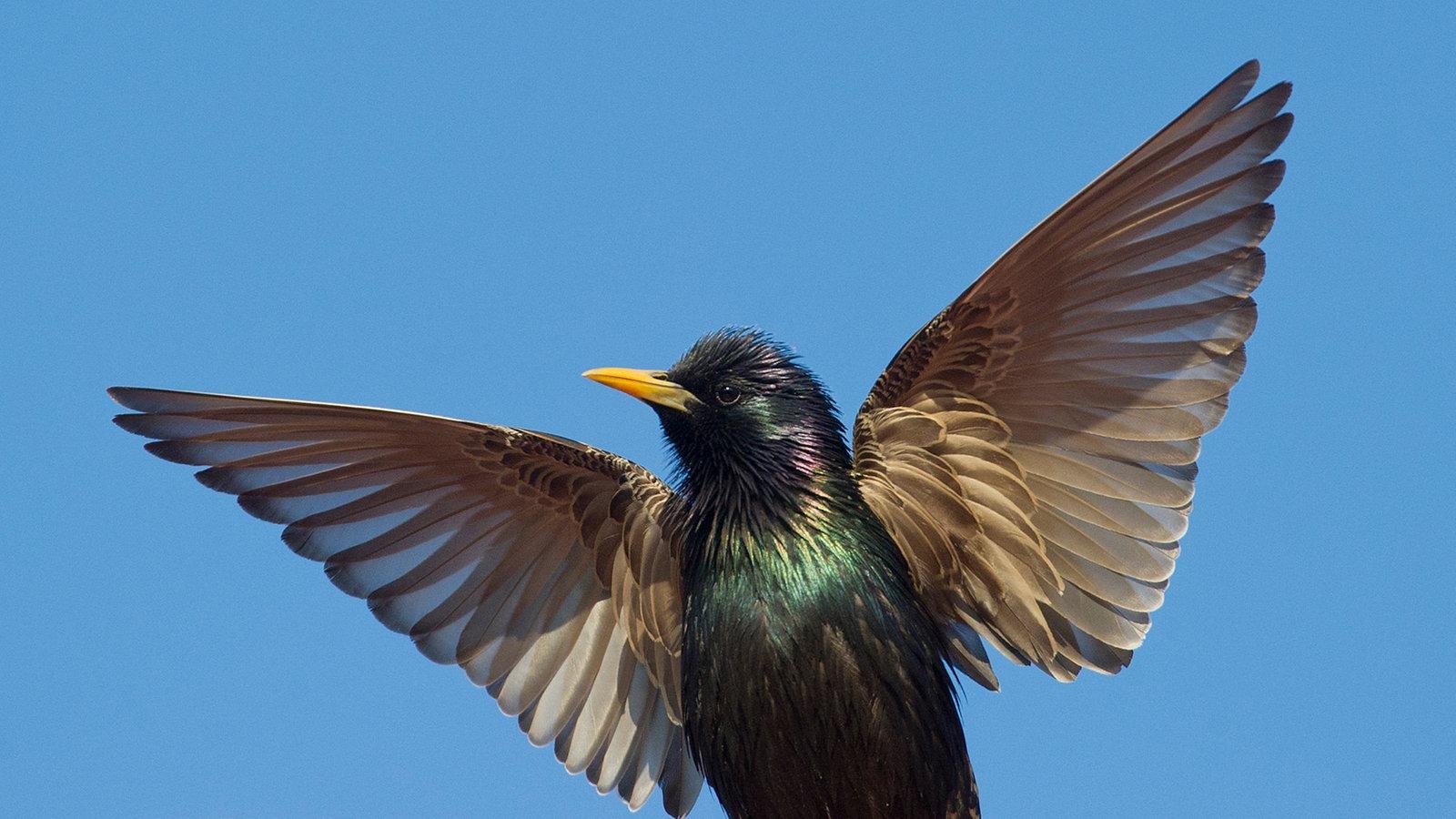 Star Vogel Bilder
