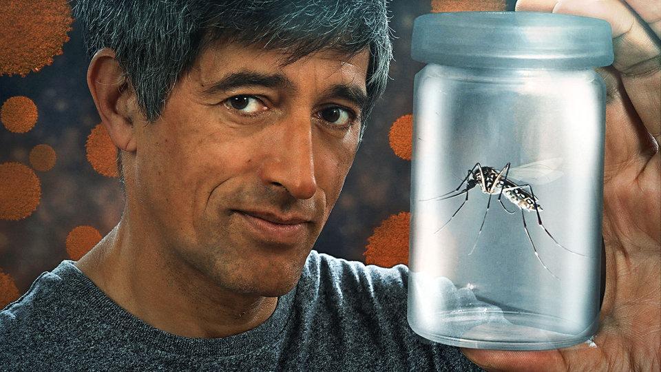 Gefährliche Mücken
